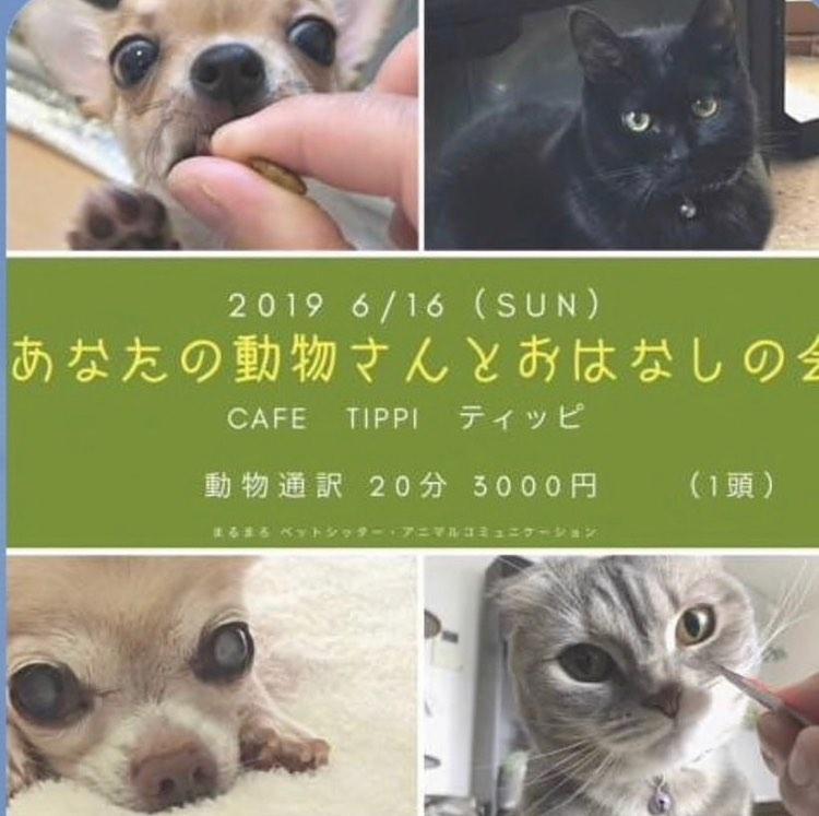 6月16日 動物さんとおはなしの会 in Cafe Tippi1